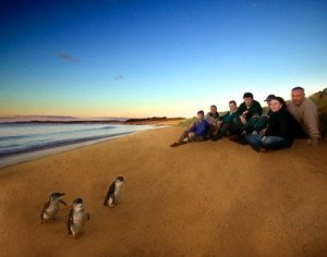 Phillip Island Day Tours by Coach Charter